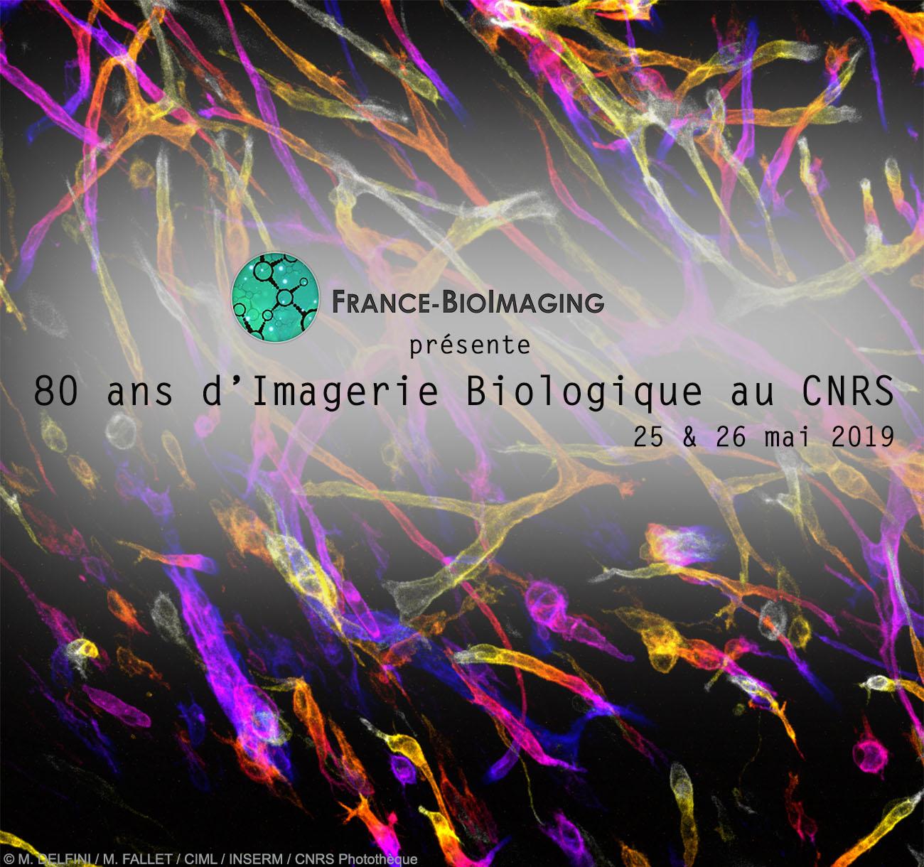 France BioImaging, 80 ans d'Imagerie Biologique au CNRS