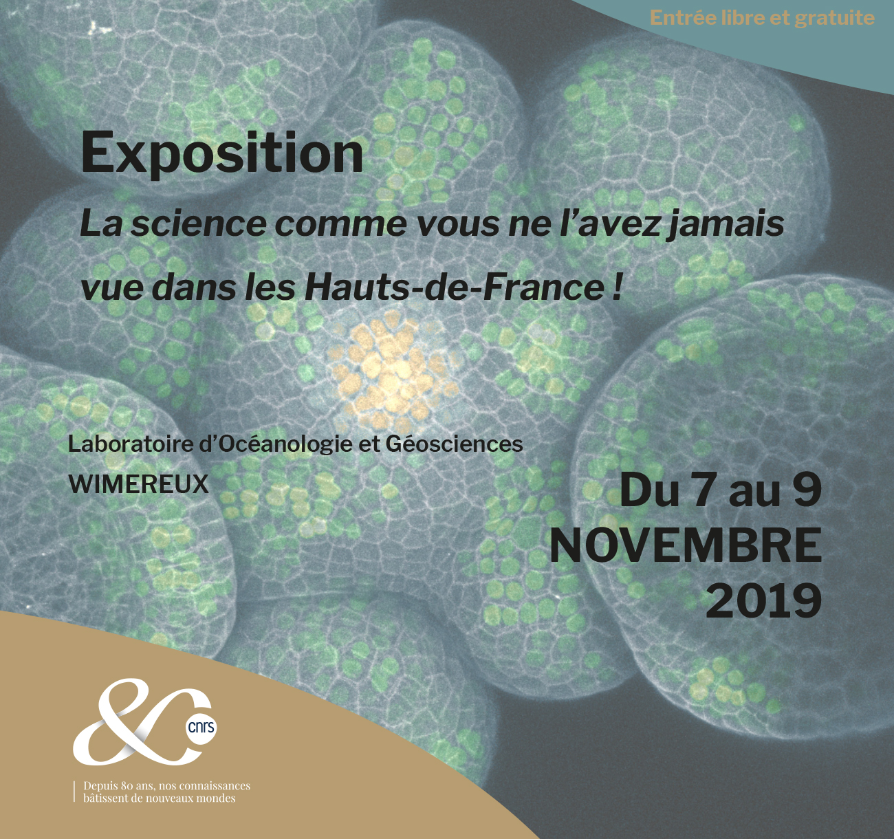 La science comme vous ne l'avez jamais vue dans les Hauts-de-France ! – Wimereux